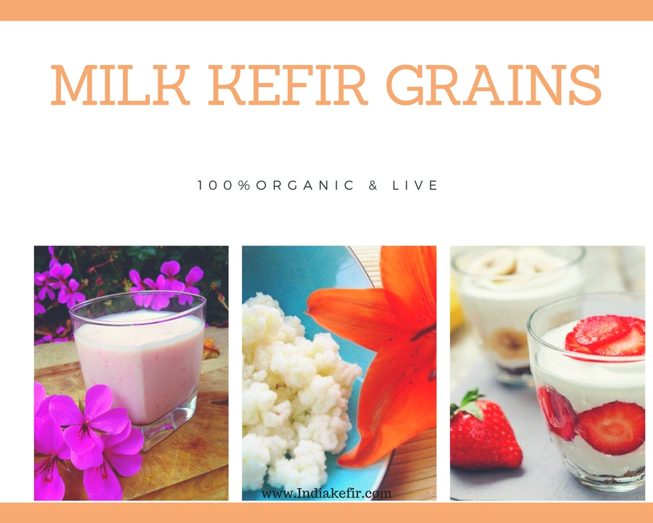 Buy Milk Kefir Grains Online in India